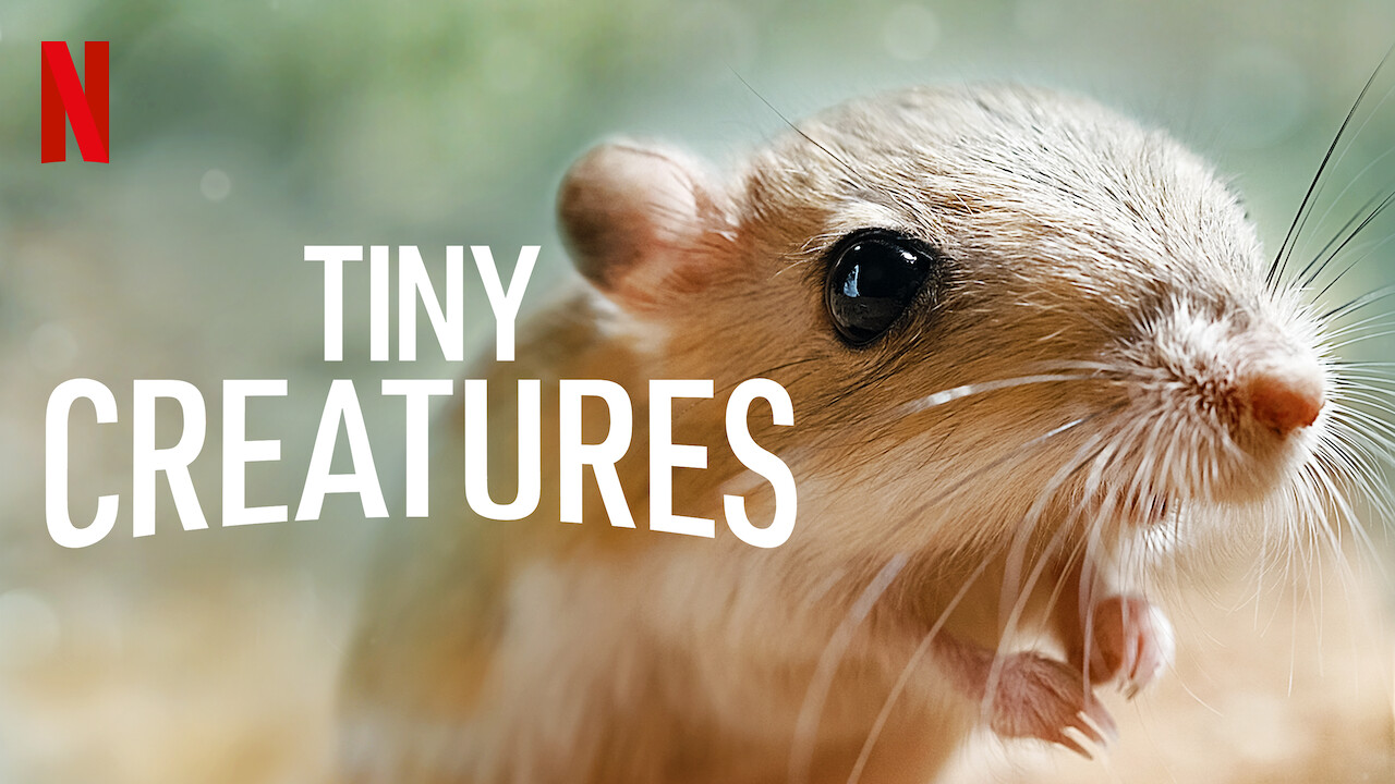 Is 'Tiny Creatures' available to watch on Canadian Netflix? - New ...
